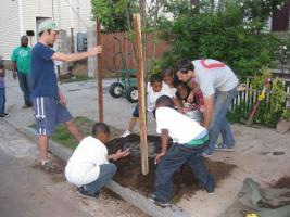 Planting a tree with Community Greenspace